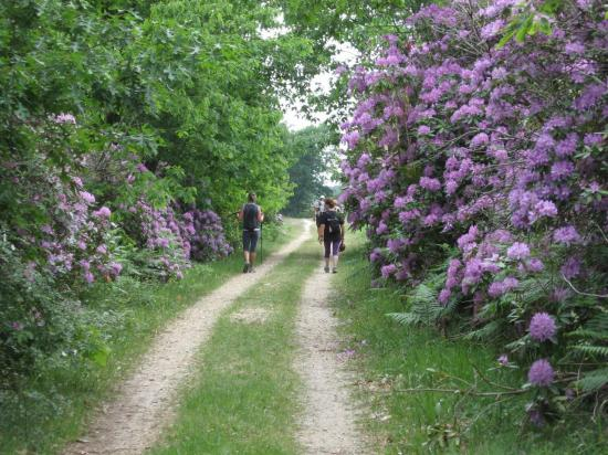 rhododendrons-st-laurent-007.jpg