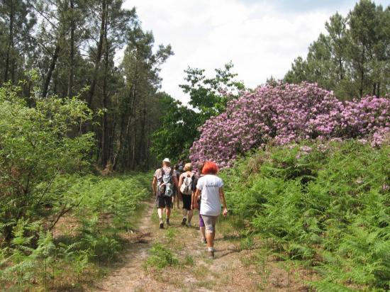 rhododendrons-st-laurent-008.jpg
